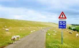 Сравнение разных систем дорожных знаков